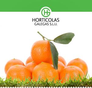horticolas3
